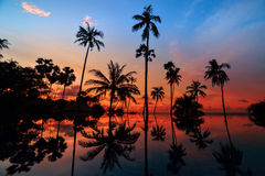 Tall coconut palm trees at twilight sky reflected in water Stock Photo