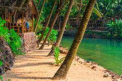 Tall coconut palms and bungalow at a resort Royalty Free Stock Images
