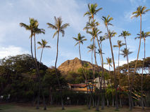 Tall Coconut trees at Leahi Beach Park with Nice homes and iconi Royalty Free Stock Images