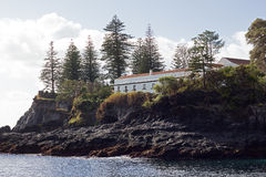 Tall conifer trees on a rocky coast of Sao Miguel Island. Stock Image