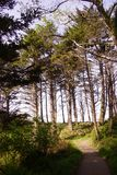 Tall conifers along coastal hills Stock Photo