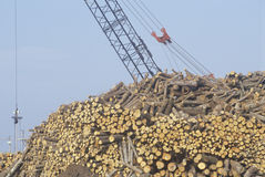 A tall crane moving logs Stock Photos