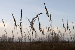 Tall dry grass in the autumn evening field. Wind Stock Photo