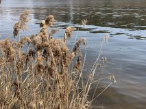 Tall dry grass by river side. Landscape background photography of water's edge stock photos