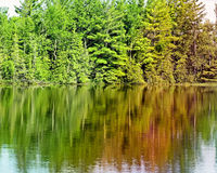 Tall Evergreen trees reflecting on beautiful calm lake waters royalty free stock photography