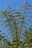 Fern branches Royalty Free Stock Image