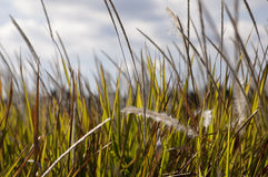 Tall Field Stock Photography