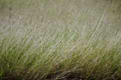 Tall field grass Royalty Free Stock Image