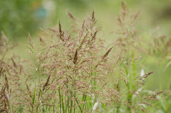 Tall field grass Stock Photography