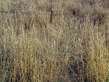 Tall Field Grass with Fence Stock Photo