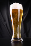Tall glass of lager Stock Photos