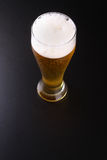 Tall glass of lager Stock Image