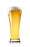 Tall glass of light beer with foam Royalty Free Stock Photography