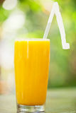 Tall glass of orange juice against a natural background. A tall glass of fresh orange juice against a natural sunlit background Stock Photo