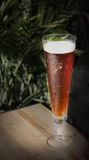 Tall glass of red beer Royalty Free Stock Photo