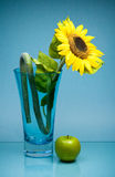 Tall glass vase with sunflower and apple on blue Stock Photo