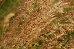 Tall grass. In the sun Royalty Free Stock Photography