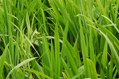 Tall grass. In the parks royalty free stock photo