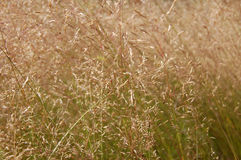 Tall grass. Grass blowing in the summer wind Stock Images