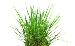Free Tall Grass Stock Photography - 93224372