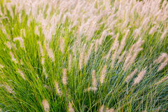 Tall Grass Abstract Stock Photo