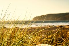 Tall Grass on Beach Sunset Outdoors Ocean Landscape Calm Warm Image royalty free stock photo