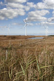 Tall grass and bogland with wind turbines Royalty Free Stock Photography