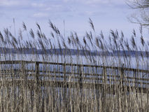 Tall Grass and Bridge on a Lake Royalty Free Stock Photo