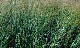 Tall Grass Stock Photos