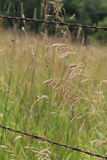 Tall grass in a country field Stock Photography