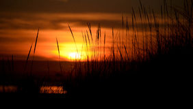 Tall grass at dunes highlighted by sunset Stock Photo