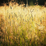 Tall grass in a field Stock Image