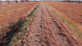 Grass field beside a dirt road stock footage
