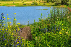 Tall grass and flowers on the lake Stock Photography