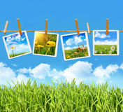 Tall grass with four pictures on clothesline