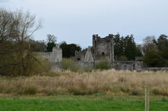 Tall Grass Growing in Field With Desmond Castle Ruins Stock Photos
