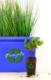 Tall grass inside recycle bin Royalty Free Stock Photo