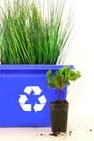 Tall grass inside recycle bin Stock Image