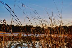 Tall grass at a lake Stock Photos