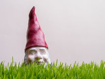 Tall Grass - Lost in the Weeds Gnome Stock Photo