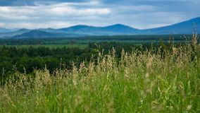 Tall grass meadow with blurred forest, mountains and cloudy sky Stock Photos