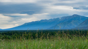 Tall grass meadow with blurred forest, mountains and cloudy sky Stock Images