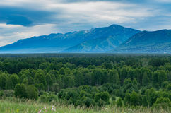Tall grass meadow with the forest, mountains and cloudy sky Royalty Free Stock Image