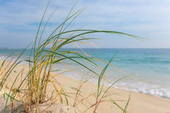 Tall Grass On The Shore Of The Sea. Royalty Free Stock Images