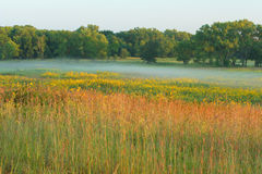 Tall grass prairie, misty morning Stock Images