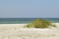 Tall grass on a sand dune Royalty Free Stock Photography