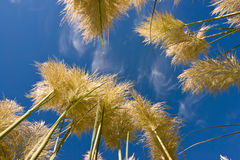 Tall grass and sky. Relaxing in the grass looking at the sky Stock Photo