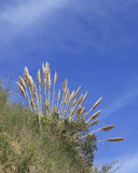 Tall grass and sky on Angel Island California. Tall grass Angel Island California blue sky clouds bay travel Stock Photo