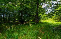 Tall grass under the trees. Lovely summer nature scenery stock photography
