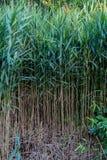 Tall grass. Stock Photo